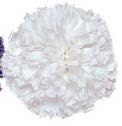 Pom Pom, White (One pom is included. This is not a pair.)